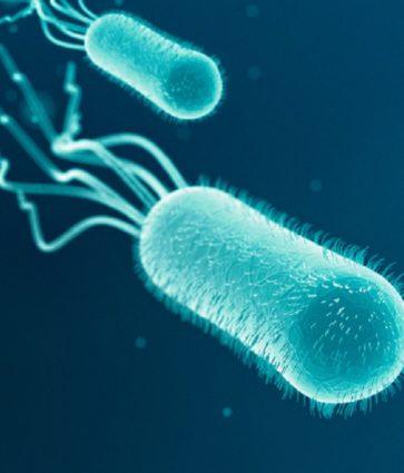 Escherichia Coli në urinë, simptomat dhe kurat