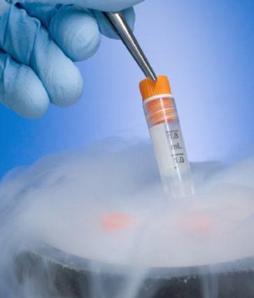 Intervista/  Dr. Besfort Ferhati: Çfarë duhet të dimë për ngrirjen e embrioneve