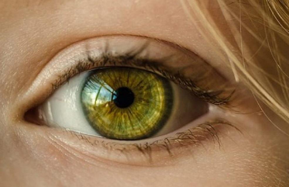 shkeputja retina