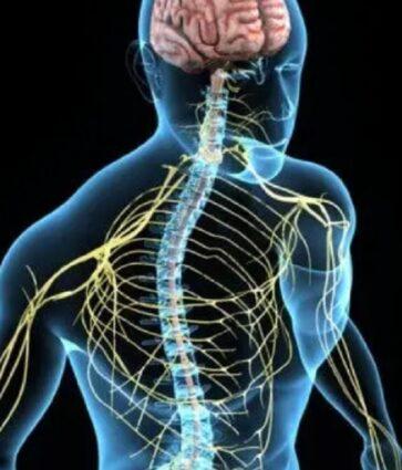 Çfarë është sindroma Horner që prek syrin dhe fytyrën